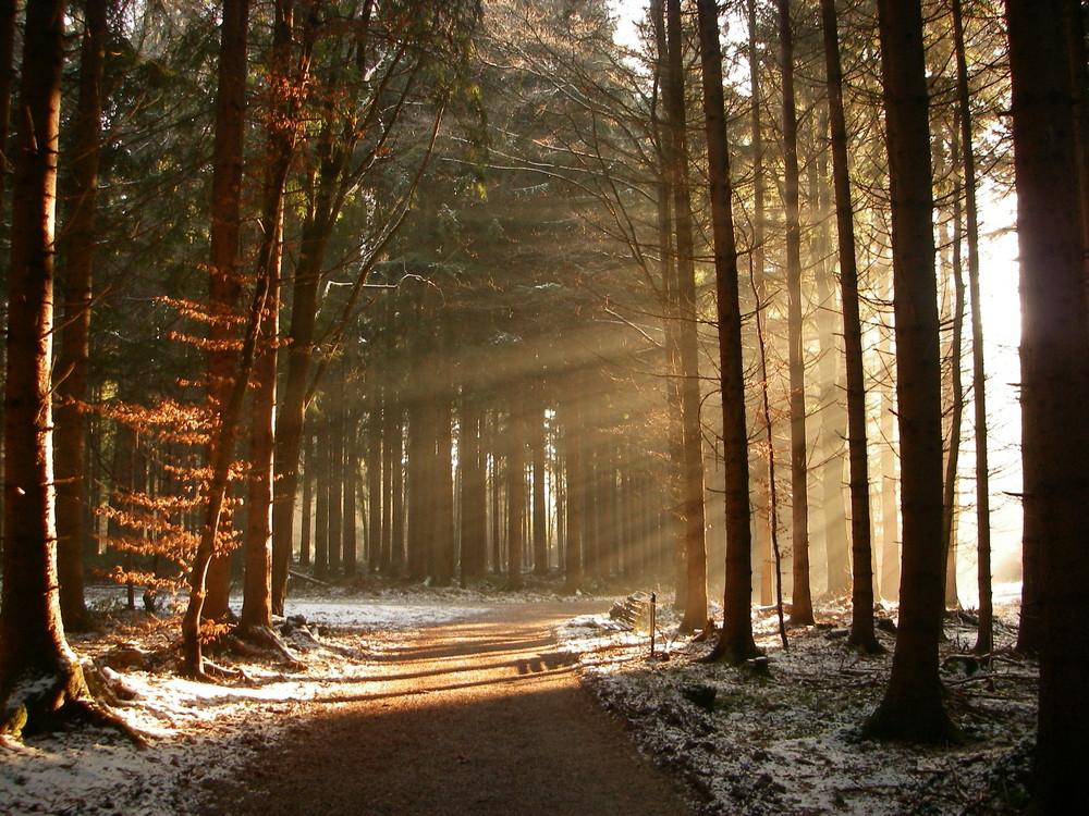 War kalt im Wald - aber richtig schön!