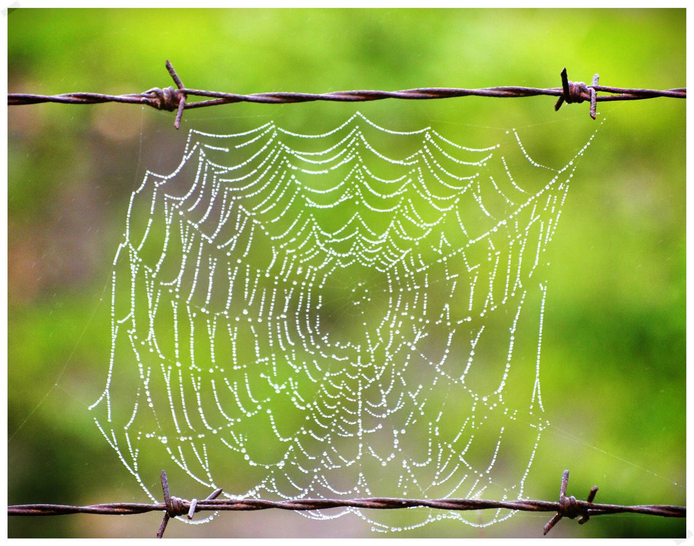 War web