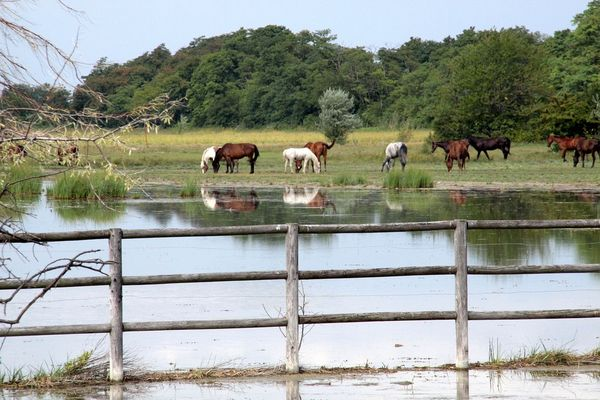 Warmblutpferde-Koppel im Naturschutzgebiet Neusiedlersee. Unbefugten ist der Zutritt verboten