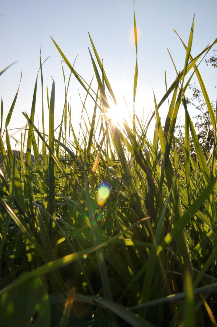 Warme Sonnenstrahlen blitzen durchs Gras