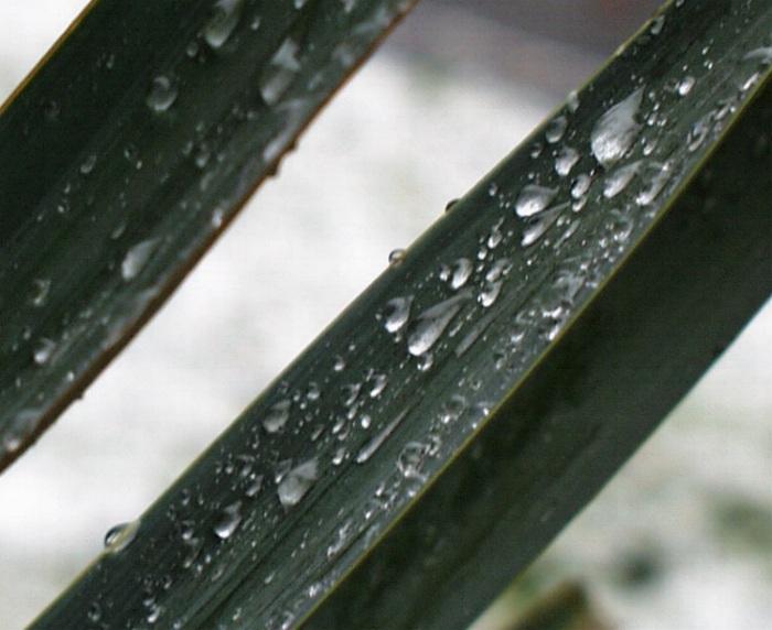 Warmer Schnee auf einer Pflanze