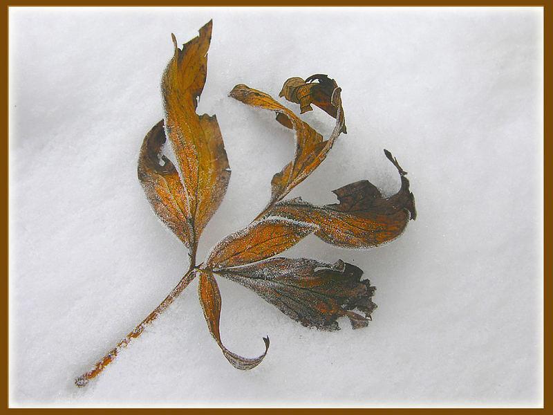 Warmes Braun im kalten Schnee