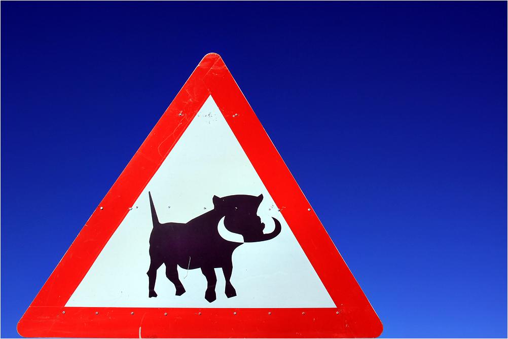 Warnung vor dem Schwein