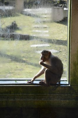 Warten auf den Fensterputzer
