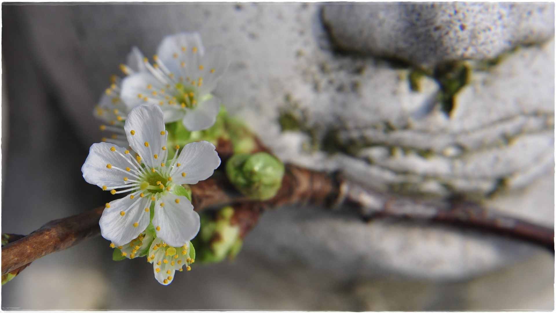 ...warten auf den Frühling...