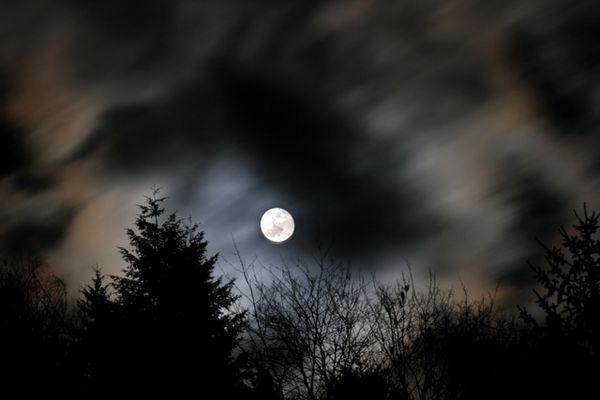Warten auf den Wehrwolf