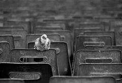 Warten auf die Papst-Audienz
