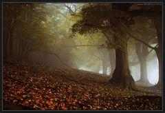 Warten auf Samhain