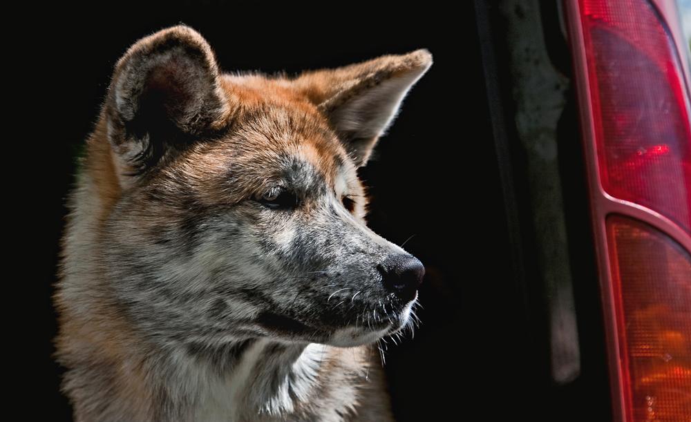 Wartender Hund!
