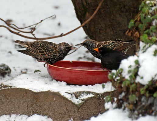 Warum Vögel den Menschen nie verstehen werden: Körner im Winter-Vogelscheuchen im Sommer!