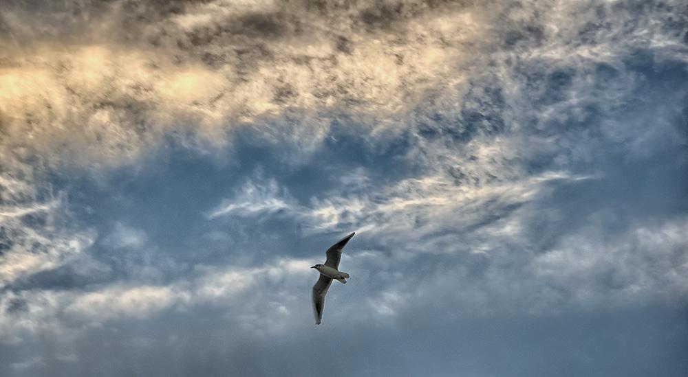 Was auch immer du dir bei dem fliegenden Vogel vorstellst