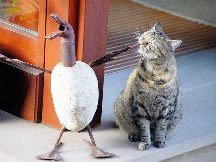 ...was bist denn Du für ein komischer Vogel...?