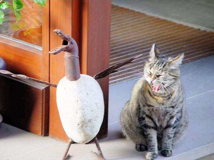 was bist denn Du für ein komischer Vogel....?..II