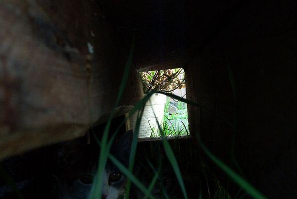 Was bzw. Wer versteckt sich hier??