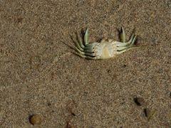 was das Meer nahm