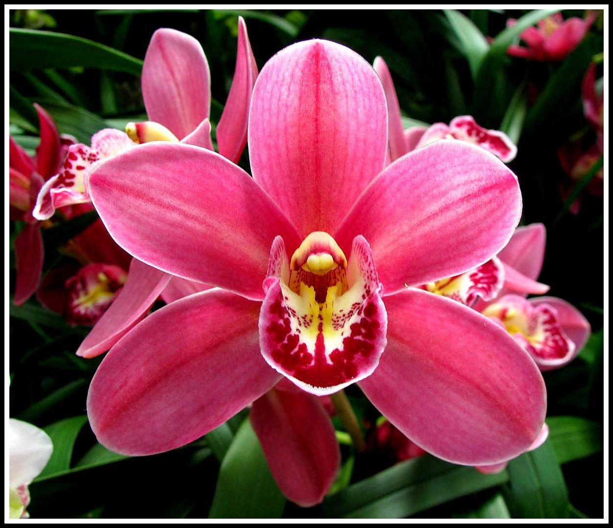 was die sonne f r die blumen ist foto bild spezial blumen orchidee bilder auf fotocommunity. Black Bedroom Furniture Sets. Home Design Ideas