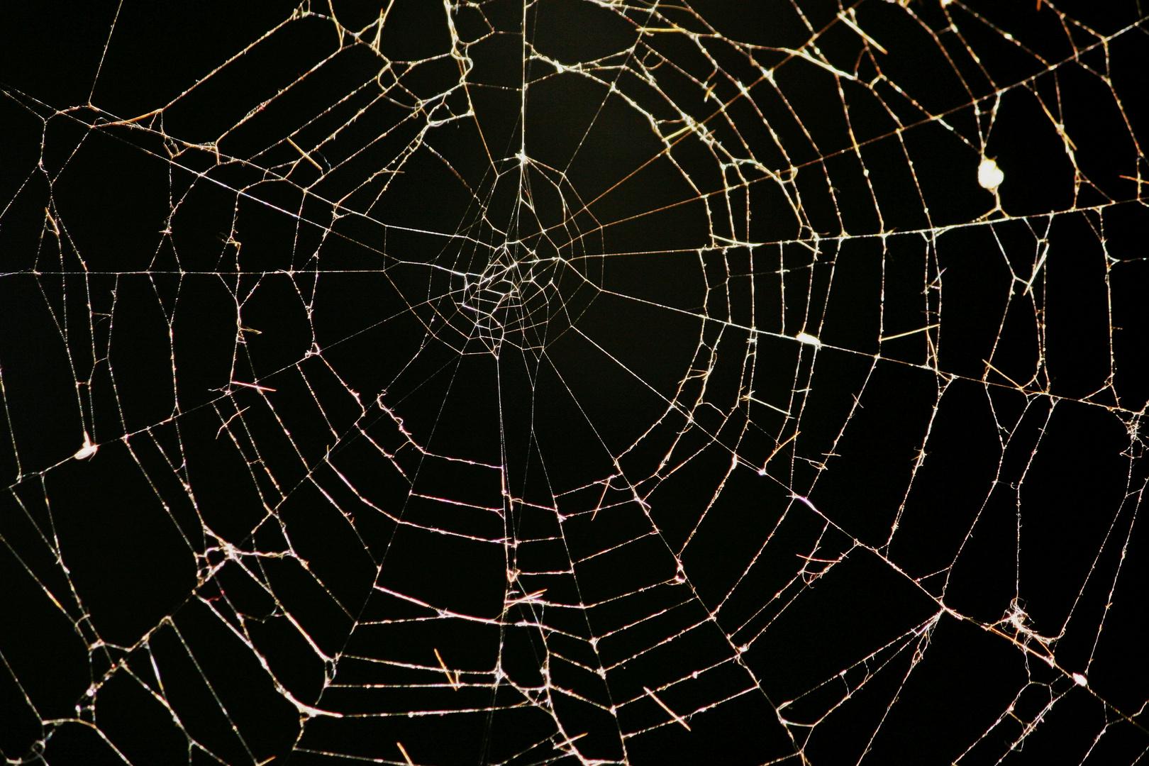 - Was die Spinne so alles schafft -
