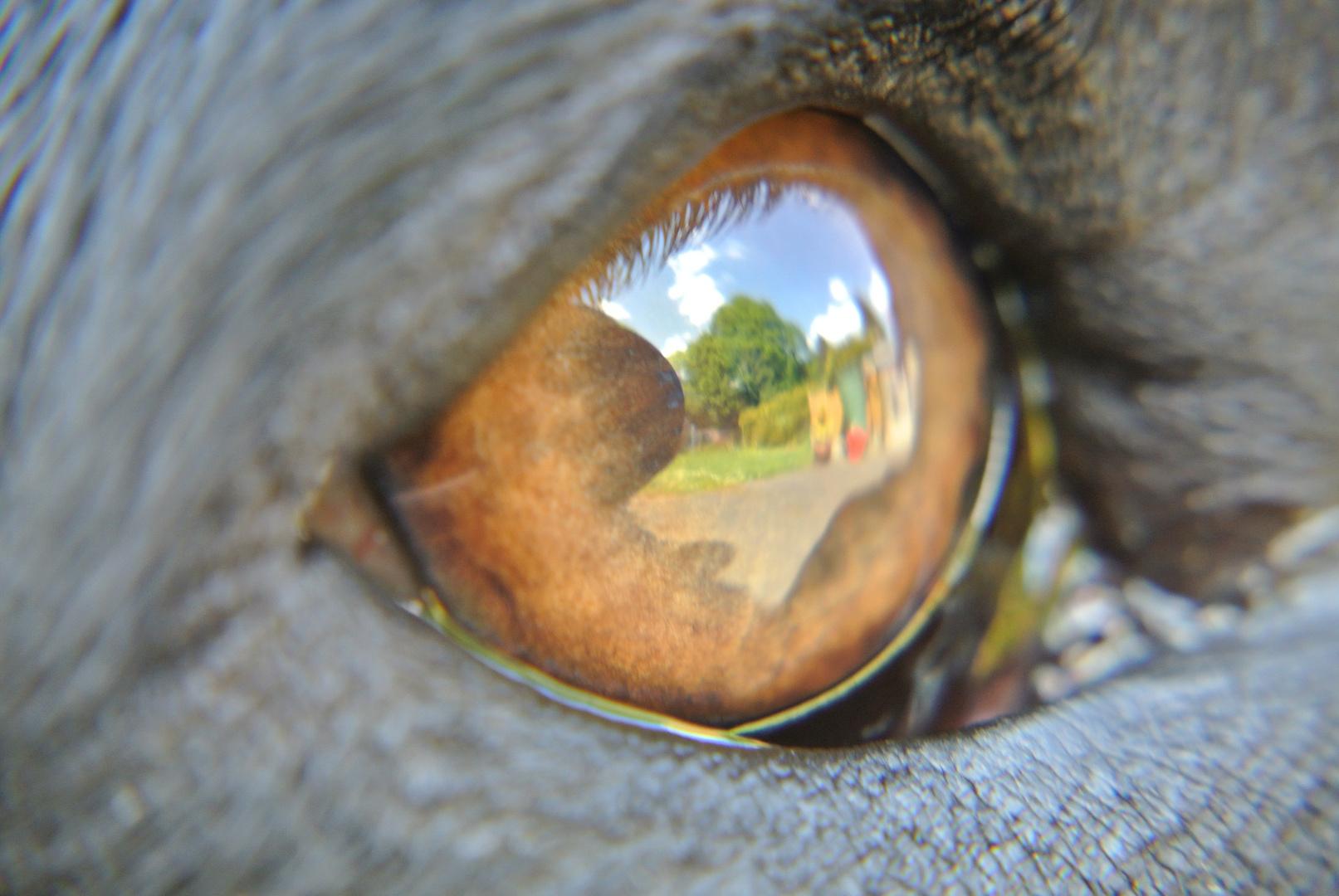 Was ein Hund sieht
