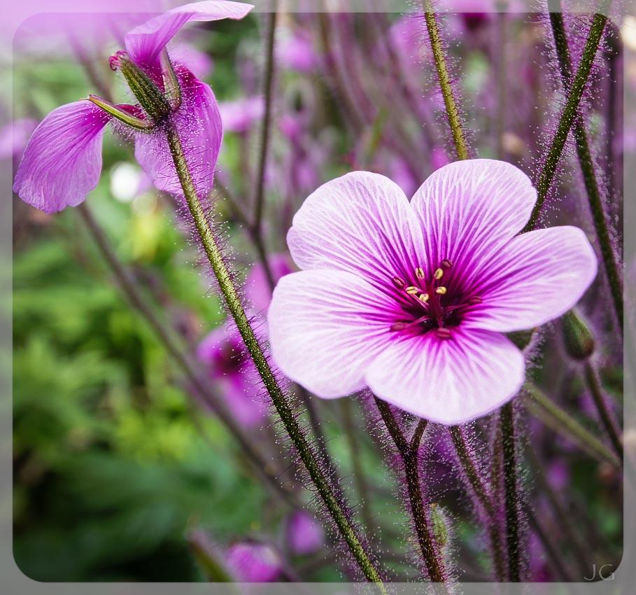 ... was ein schönes Blumen-Bäumchen das war...