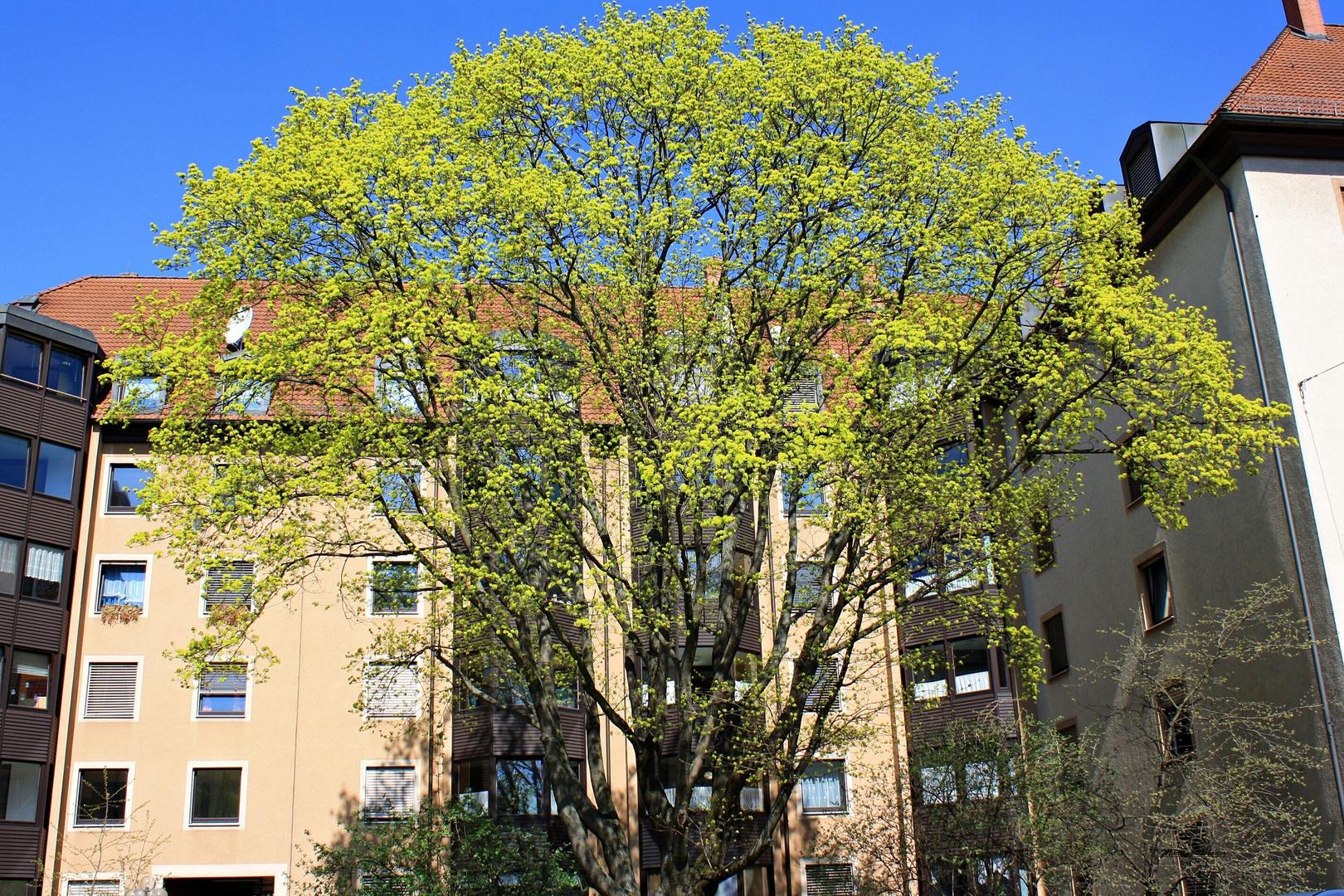 was für ein Baum