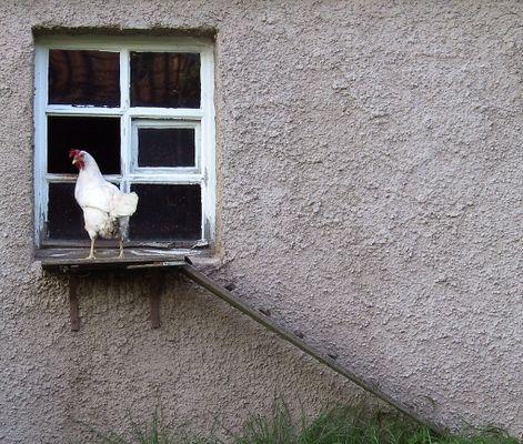 Was für ein glückliches Huhn
