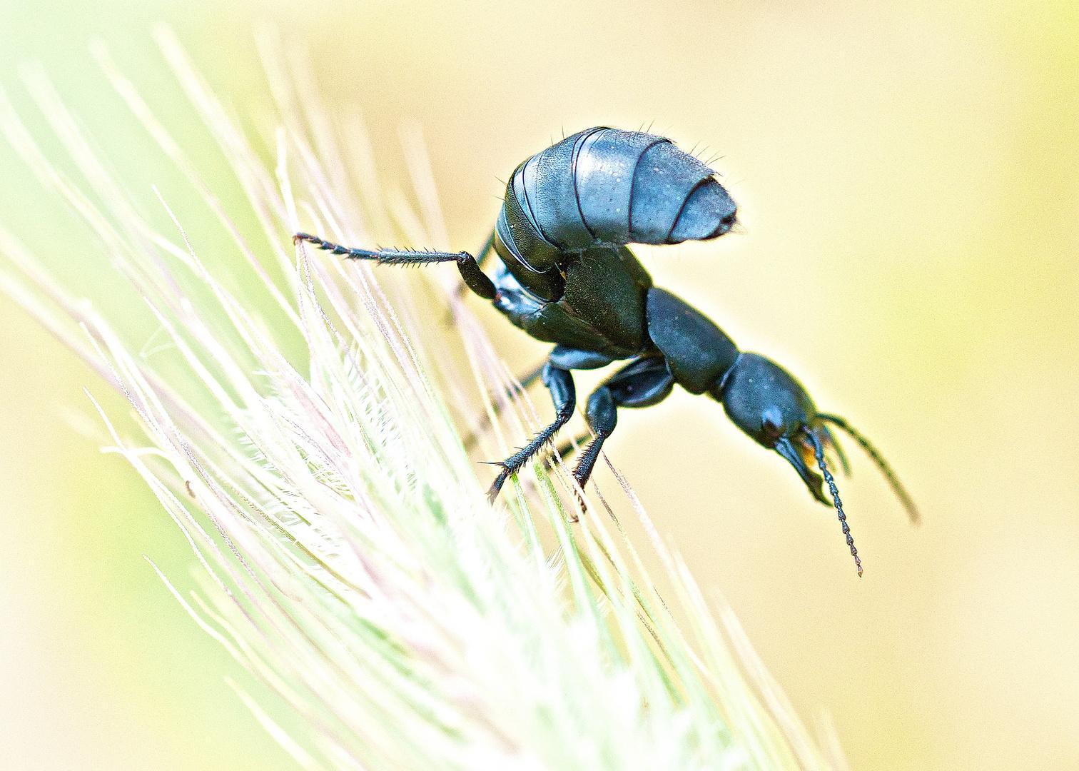 was für ein Käfer ?