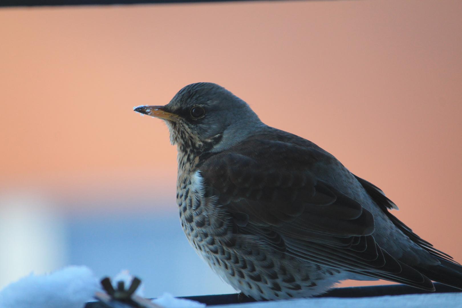 Was für ein Vogel ?