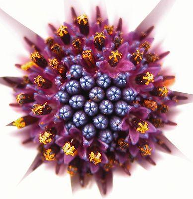 Was für eine Blüte