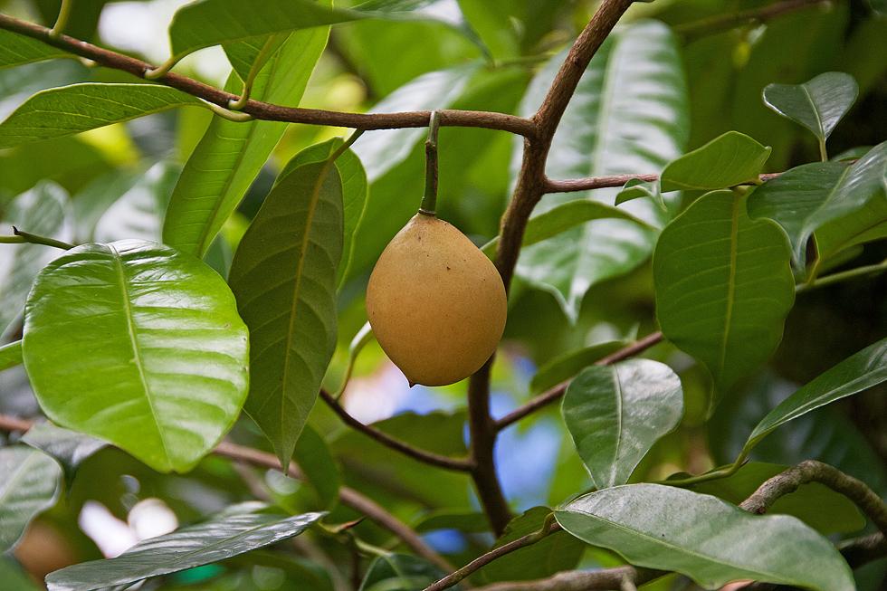 Was für eine Frucht ist das......
