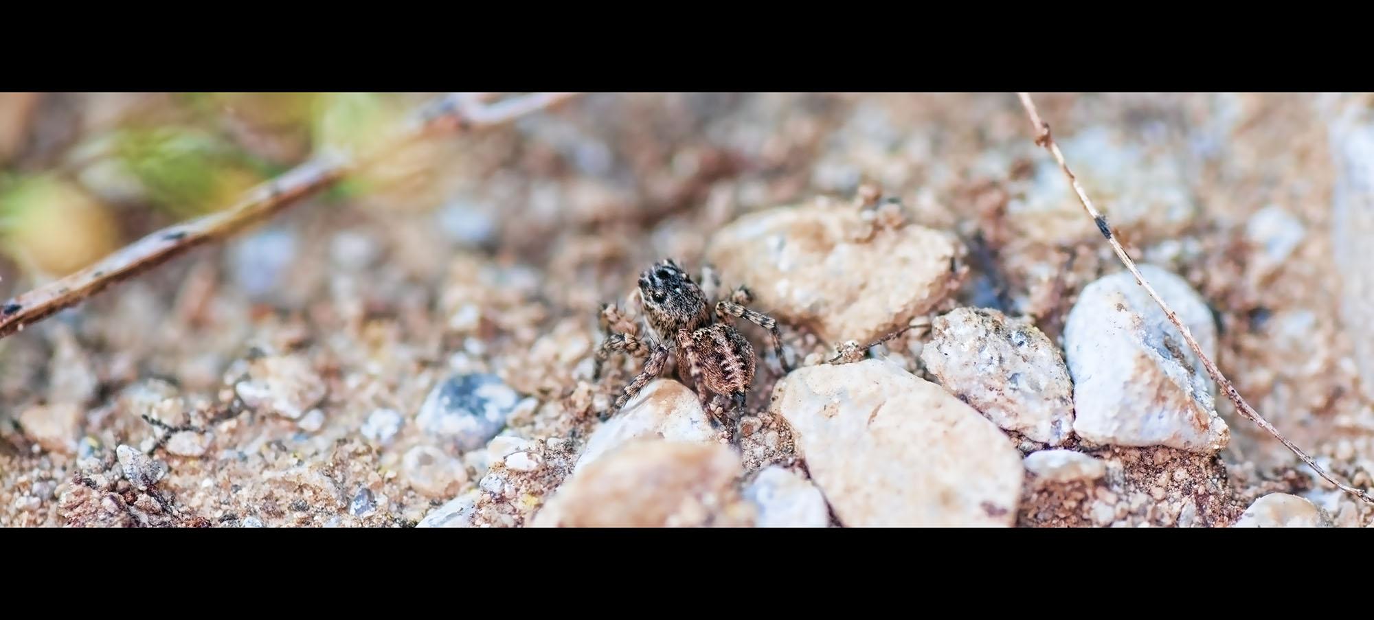 Was für eine Spinne ist das????