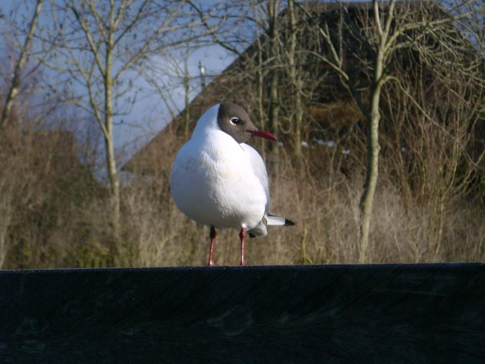 Was fürn Vogel!