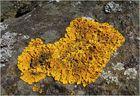 Was Gelbes zu Ostern