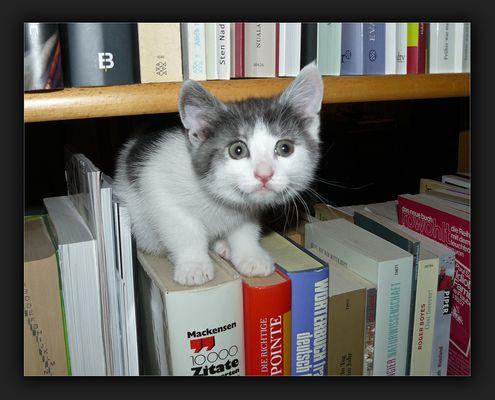 Was gibt's denn Neues? Die Bücher kenn' ich schon!