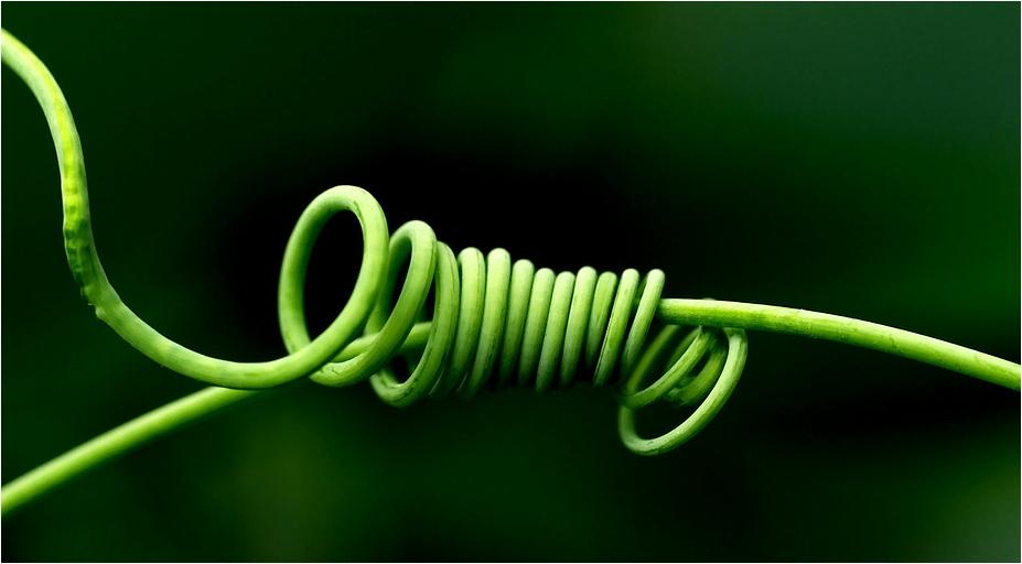 was grünes
