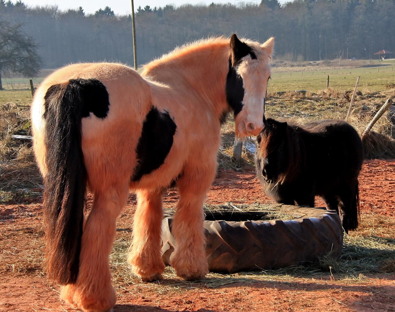 Was guckst du ? Noch nie ein rosa Pferd gesehen