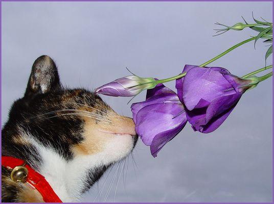 Was haben Katze mit Blumen?
