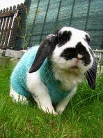 Was?! Hast du noch nie einen Hasen mit Pulli gesehen?