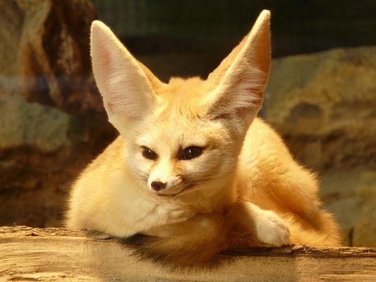 Was hast du nur für große Ohren?!