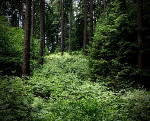 """Was im Wald wirklich geschieht: Heute """"Die Elfenrutsche"""""""