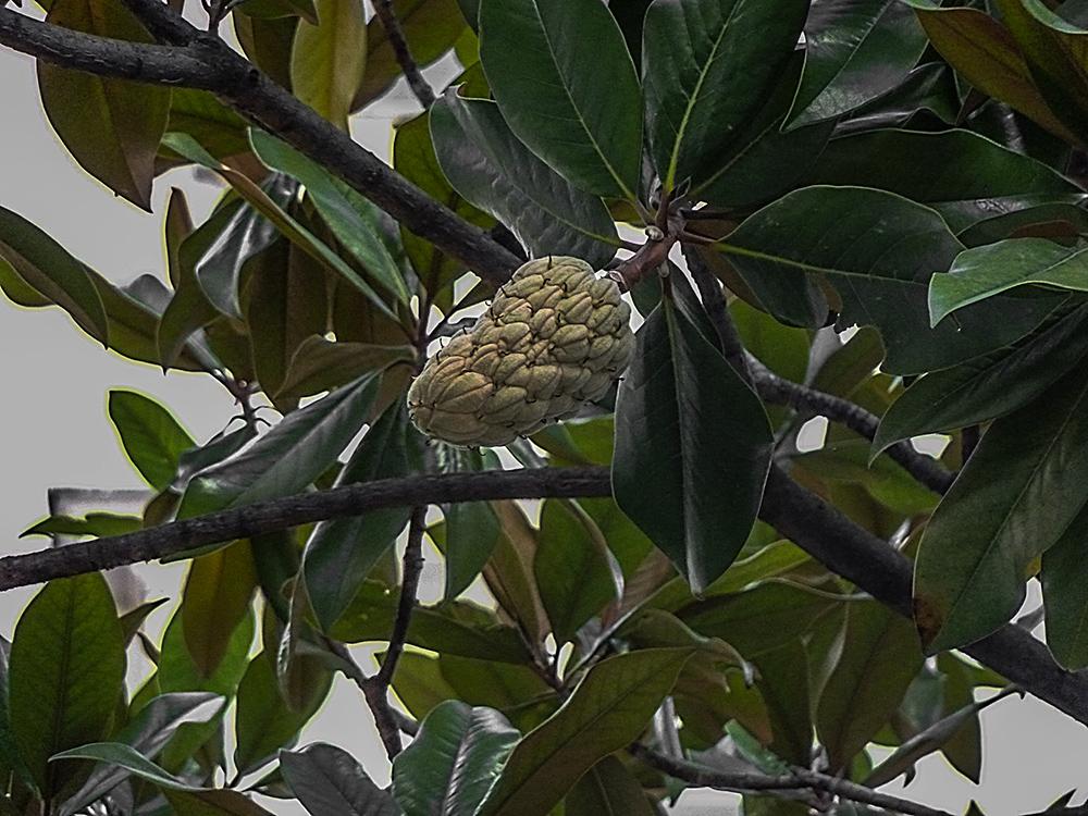 Was ist das für ein Baum ?