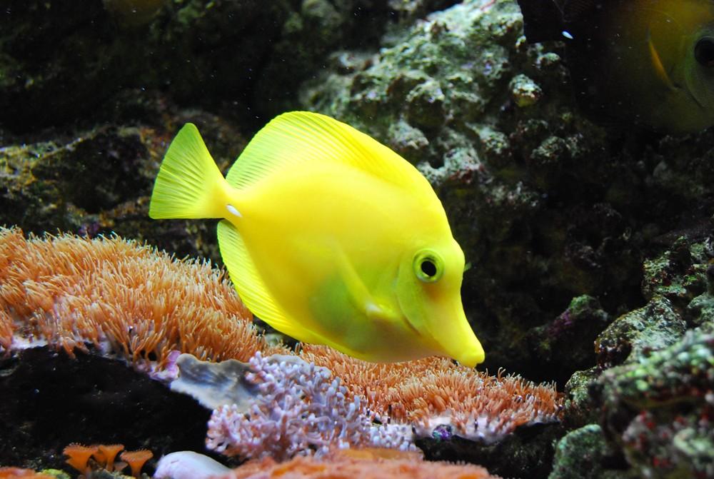 Was ist das für ein Fisch ?