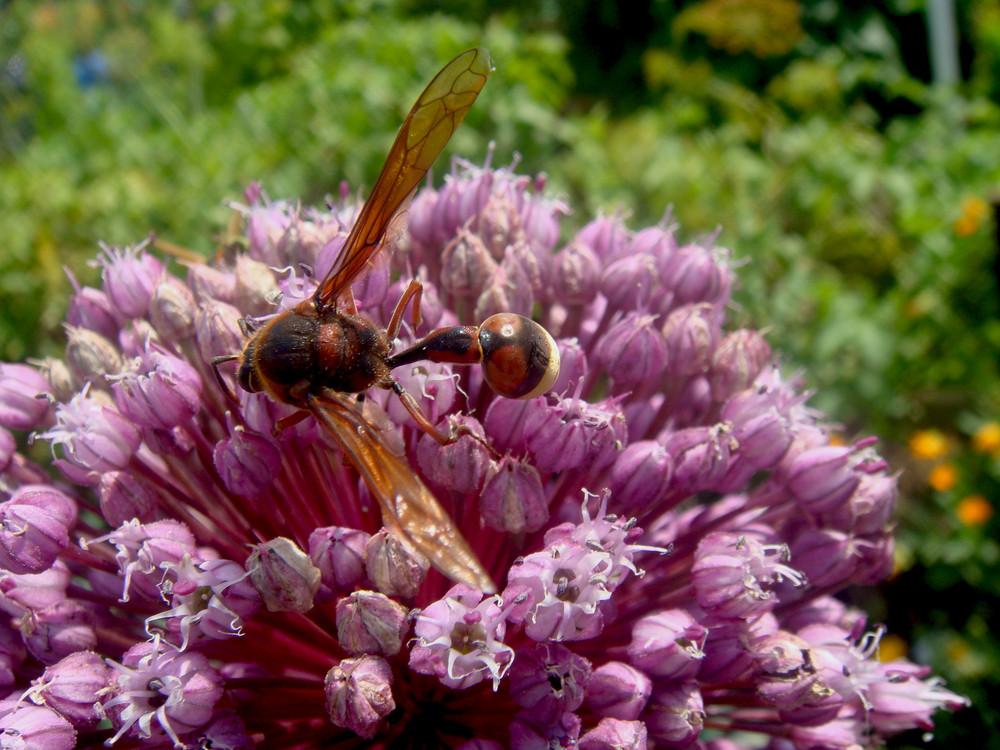 Was ist das für ein komisches Insekt?