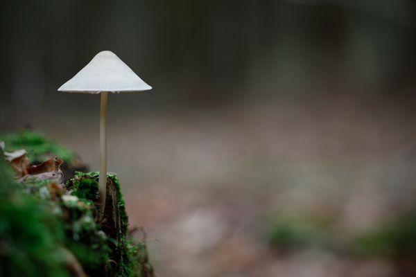 ...was ist das für ein Pilz??????