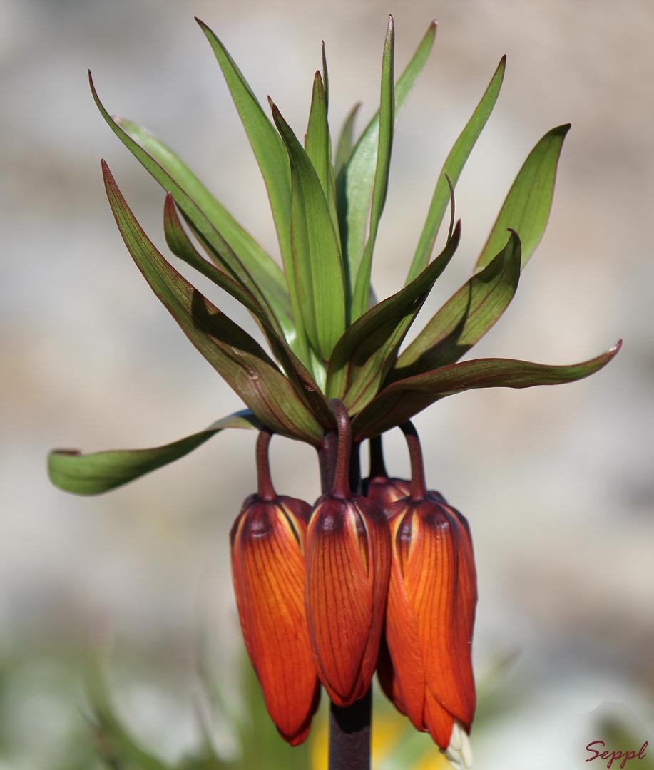 Was ist das für eine Pflanze?