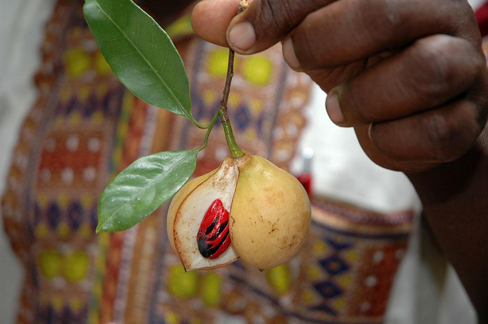 Was ist das wohl für ne Frucht?