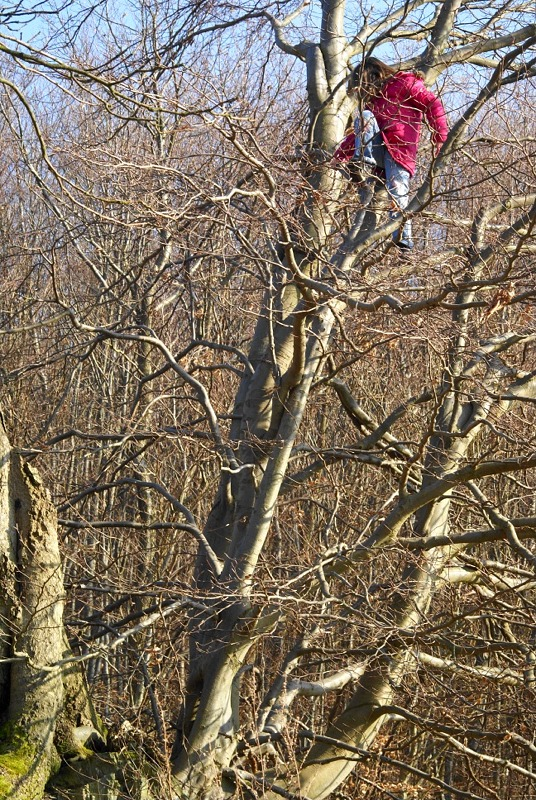 Was ist es? Sitzt auf dem Baum ...