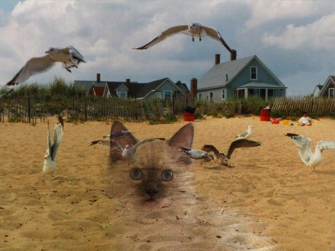 ... was macht meine Katze am Strand ...
