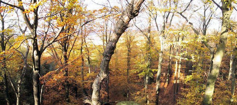 ...was man manchmal vor lauter Bäumen nicht sieht :-)