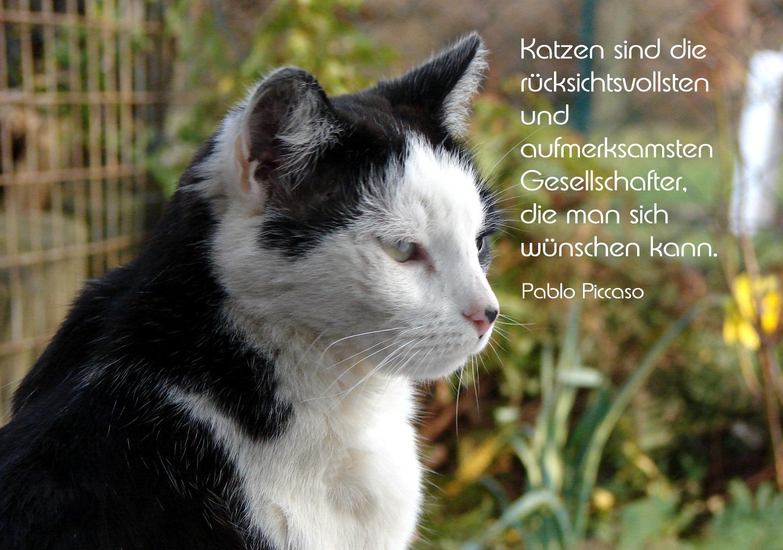 Was Picasso über Katzen sagt