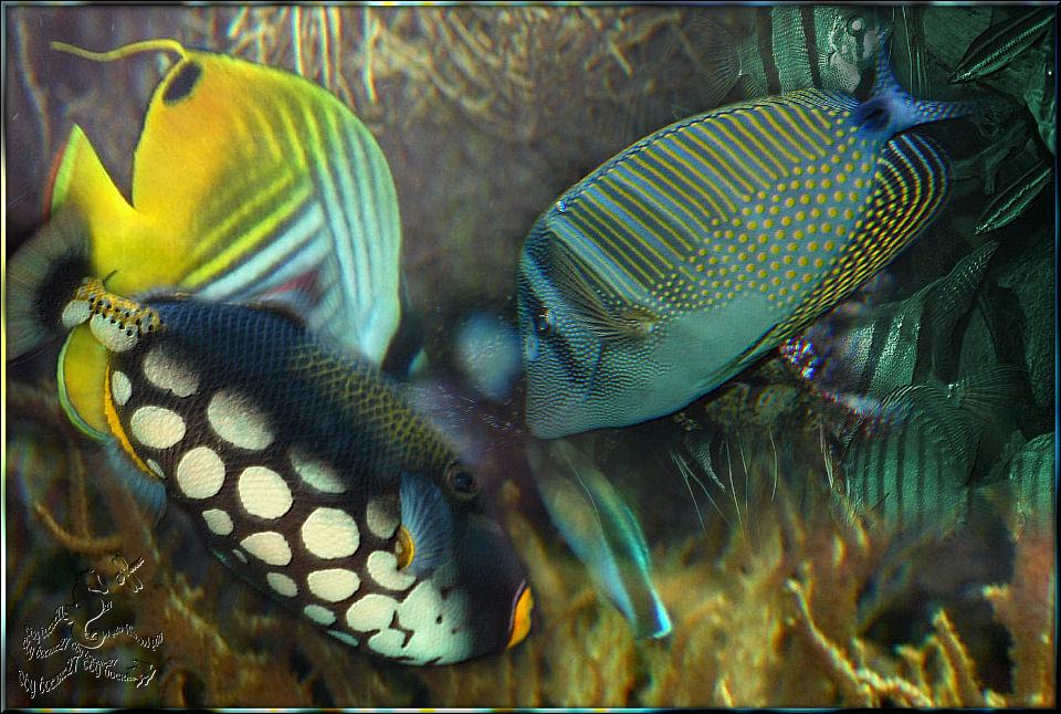 Was sich diese Fische wohl.....................